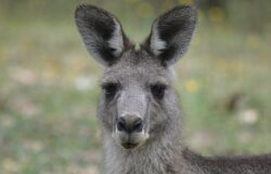 Weird but True Facts for Kids: Fun Facts on Australian Animals